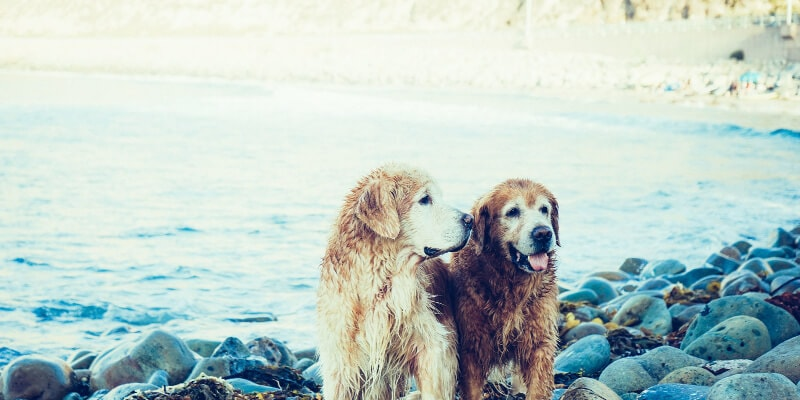 mascotas.blog-posts (1)